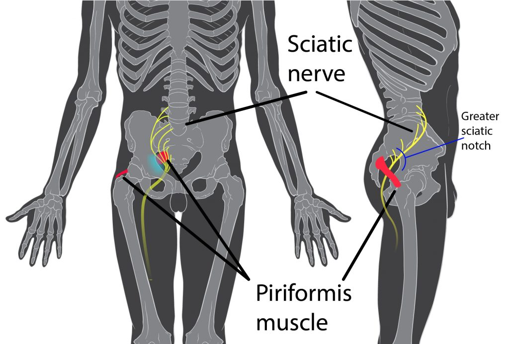 Sciatic Nerve route